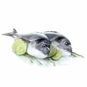 Mrazené ryby